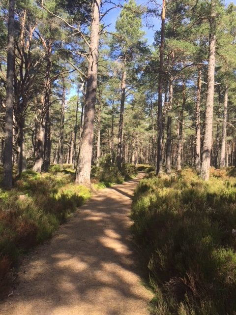 There were paths through the Cairngorms National Park that were crying out to be explored.